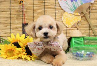 色んな犬種のシャンプー&カット