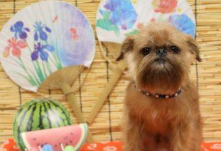 ヨーキーカット 色々な犬種のシャンプー