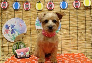ノーフォークのカット&ハーブパック&色んな犬種のシャンプー