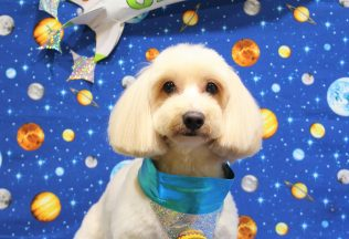 ミックス犬シャンプー&カット ポメラニアン柴犬カット ノーフォークシャンプー