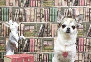 色々な犬種のシャンプー