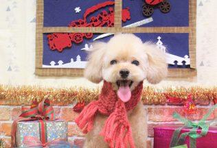 プードル ミックス犬カット 色んな犬種のシャンプー