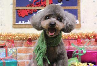 プードル ペキプーカット 色んな犬種のシャンプー
