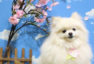 ミックス犬 ダックスカット 色んな犬種シャンプー